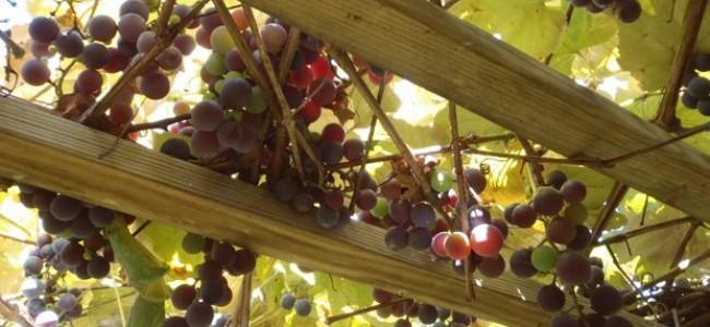 Prancūziško vyno takais. Kokį vyną ragauti nuvykus į Prancūziją?
