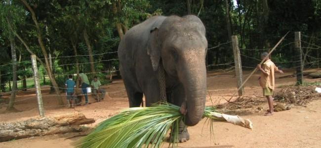 Egzotinės kelionės. Lankytinos vietos Šri Lankoje, kurias būtina pamatyti