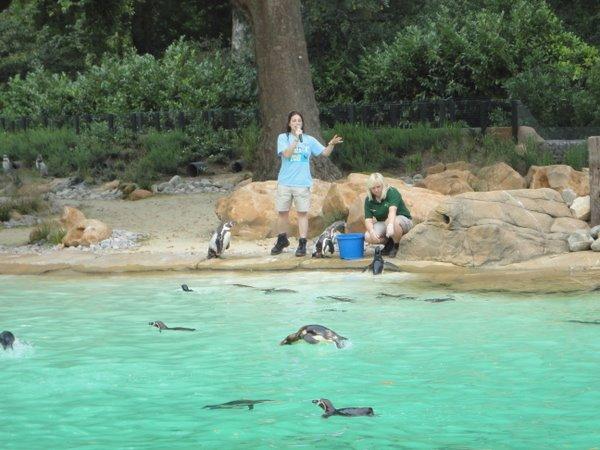 Londono zoologijos sodas