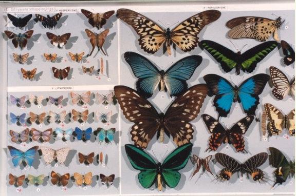 Zoologijos ir antropologijos muziejus