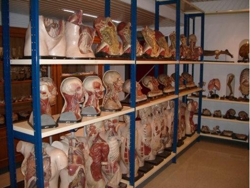 Žmogaus anatomijos ir embriologijos muziejus