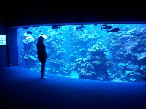 Maljorka Palmos akvariumas