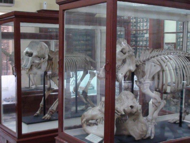 Malta Ghar Dalam muziejus