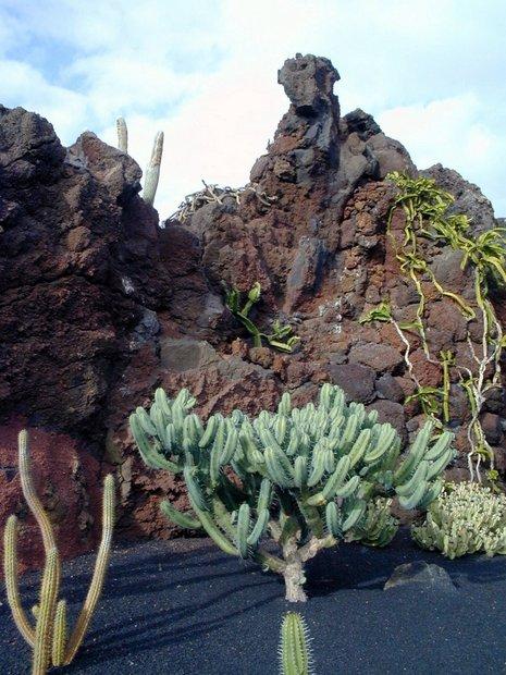 Lanzarote kaktusų sodas