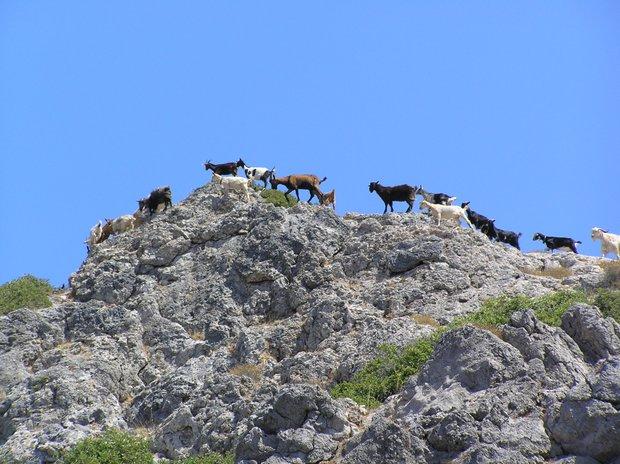 Samarijos tarpeklis Kretoje