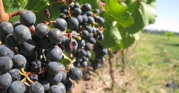 Kelionė po žymius Portugalijos vynų regionus