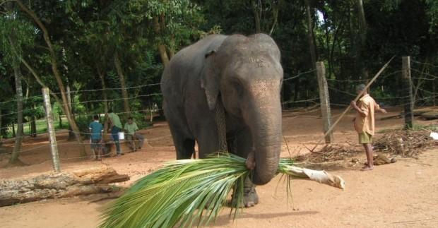 Lankytinos vietos Šri Lankoje, kurias būtina pamatyti