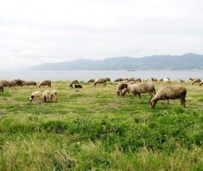 Sicilijos Komiso miestas – lankytinos vietos ir dar šis tas