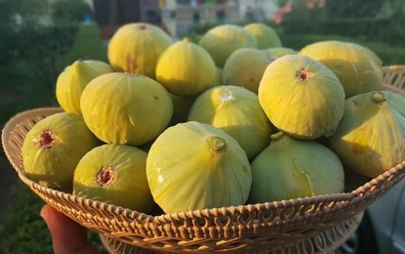 Albanijos virtuvė: ką paragauti atostogaujant Albanijoje?